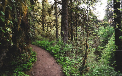 I'm Hiking the PCT Next Year…Yes All of It!
