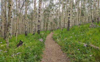Day 4 〣 Colorado Trail Journal