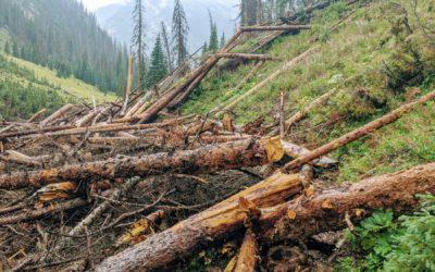 Day 24 〣 Colorado Trail Journal